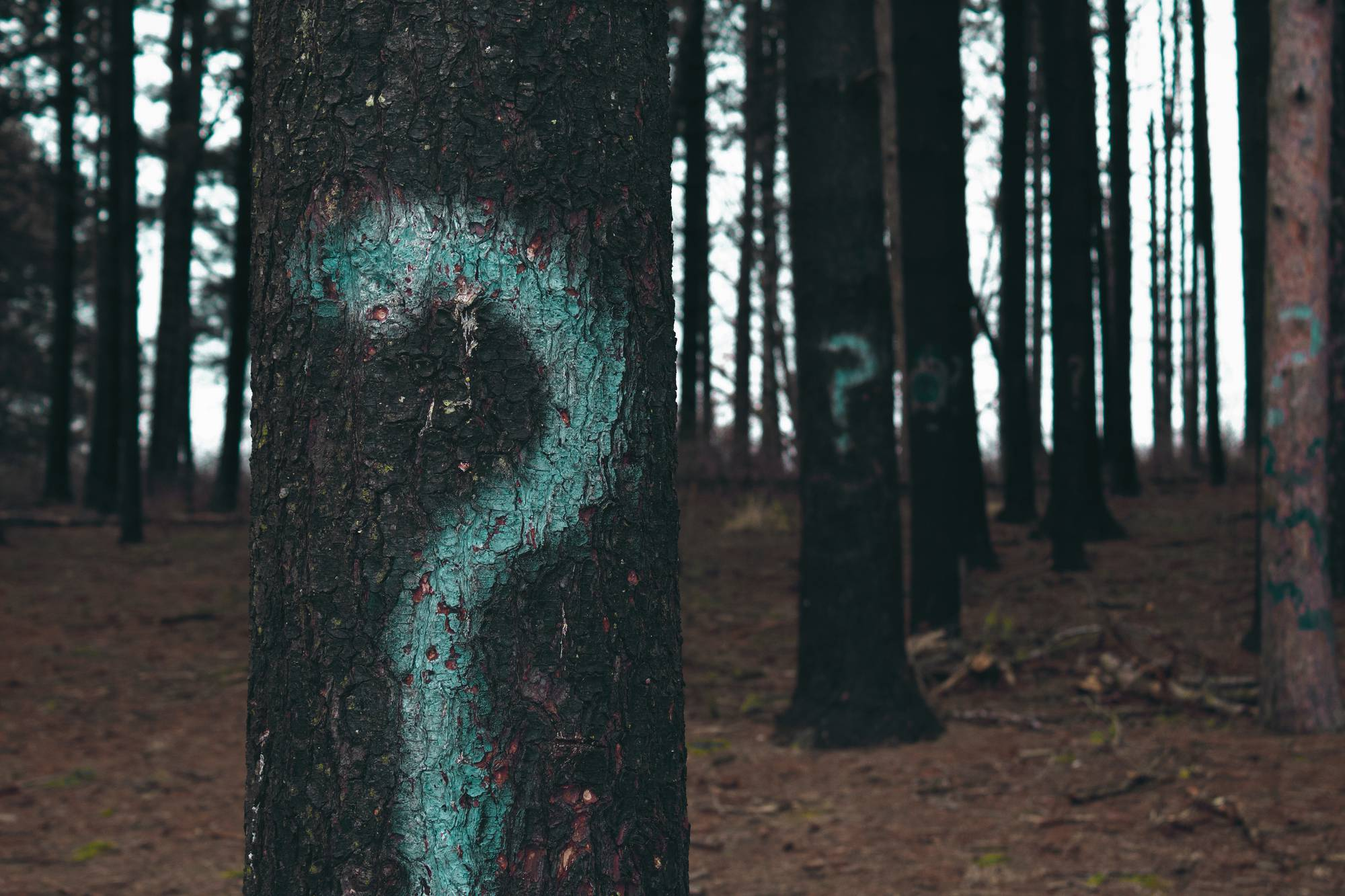 Image for Ask Hannah